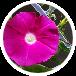 Nakahiro